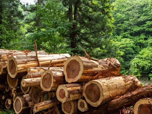 """木材不足で家が建てられない?身近に迫る""""ウッドショック""""とは ~住宅コラム vol.03の画像"""